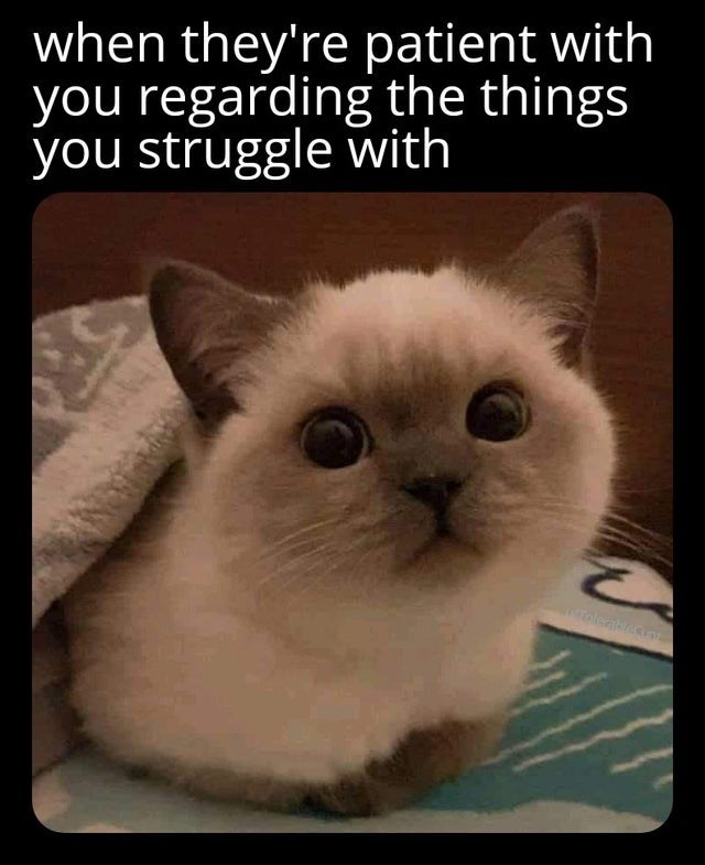 Cat - when they're patient with you regarding the things you struggle with