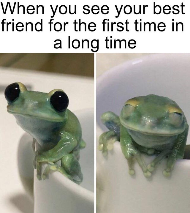 Frog - When you see your best friend for the first time in a long time W/elch3w