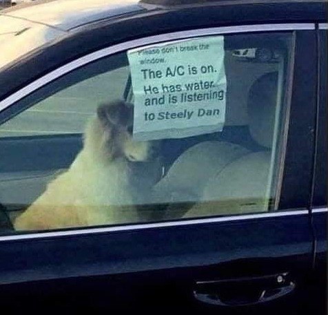 Car - Thase don't bresk the window. . The A/C is on. He has water and is listening to Steely Dan