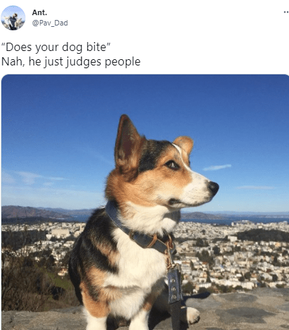 """Sky - Ant. @Pav_Dad """"Does your dog bite"""" Nah, he just judges people"""
