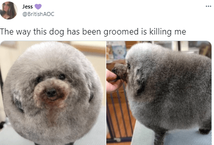 Nose - Jess @BritishAOC The way this dog has been groomed is killing me