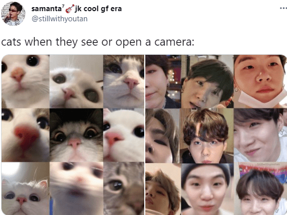 Nose - samanta'jk cool gf era @stillwithyoutan cats when they see or open a camera: