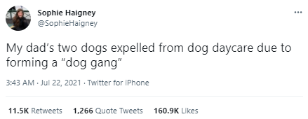 """Rectangle - Sophie Haigney @SophieHaigney My dad's two dogs expelled from dog daycare due to forming a """"dog gang"""" 3:43 AM Jul 22, 2021 - Twitter for iPhone 11.5K Retweets 1,266 Quote Tweets 160.9K Likes"""