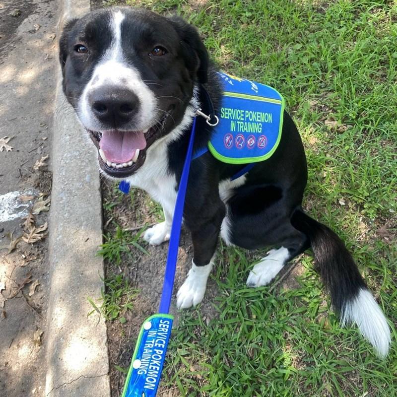 Dog - SERVICE POKEMON IN TRAINING SERVICE POKEMON IN TRAINING