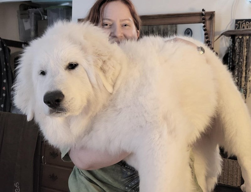 Dog - TARC