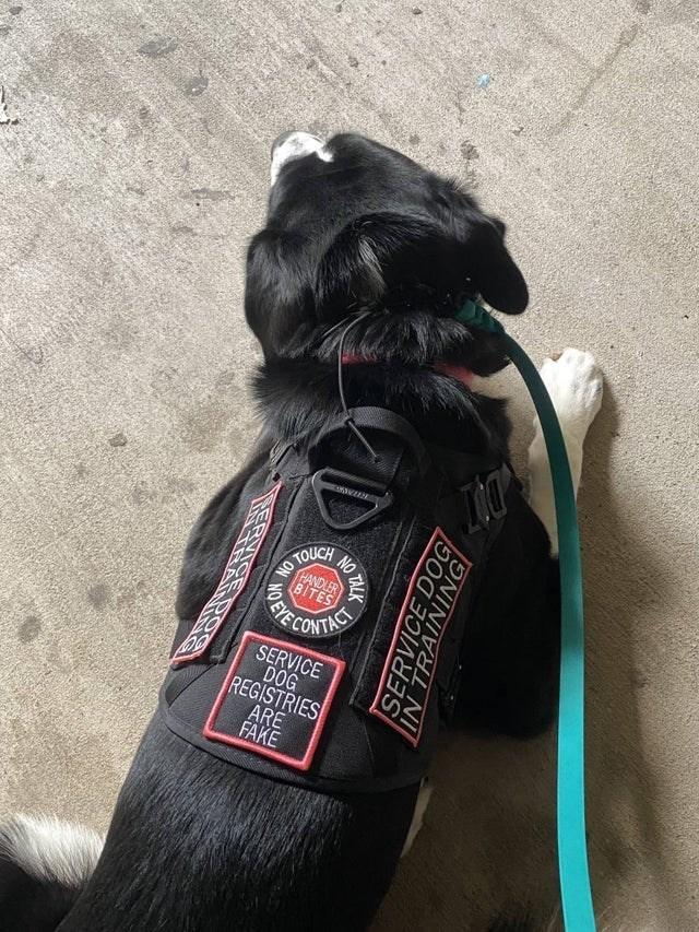 Bicycle - DOT TOUCH HANDLER BITES NO SERVICE DOG REGISTRIES ARE FAKE NO TALK DEYER SERVICE DOG IN TRAINING