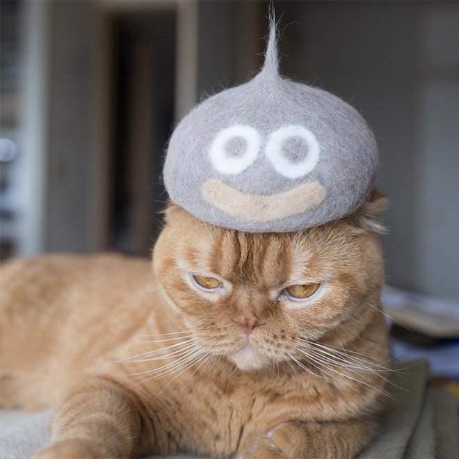 Cat - 00