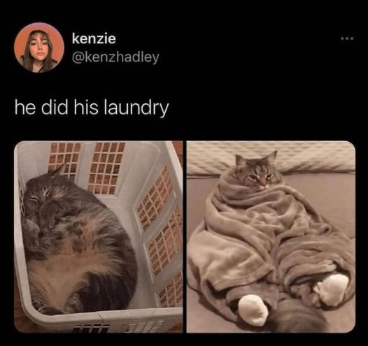 Brown - kenzie @kenzhadley he did his laundry