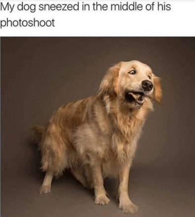 Dog - My dog sneezed in the middle of his photoshoot