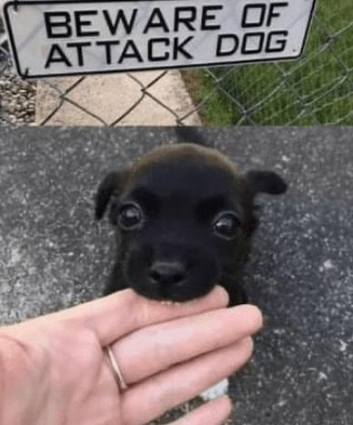 Dog - BEWARE OF AT TACK DOG.
