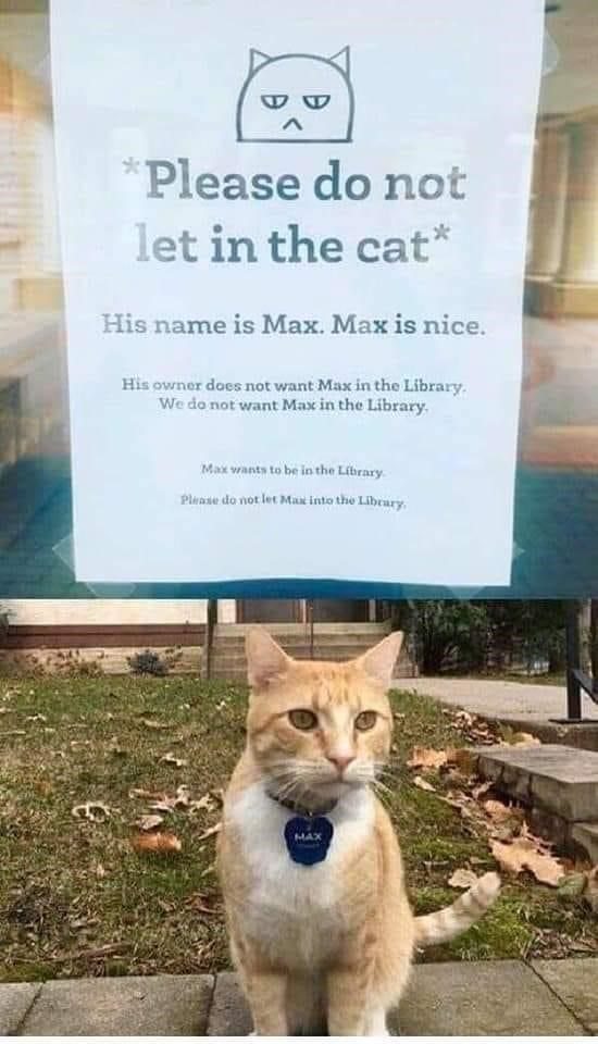 Felidae - *Please do not let in the cat* His name is Max. Max is nice. His owner does not want Max in the Library. We do not want Max in the Library. Max wants to be in the Library. Please do not let Mat into the Librury. MAX