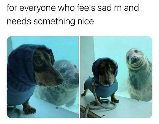 Dog - for everyone who feels sad rn and needs something nice