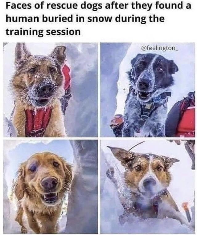 Dog - Faces of rescue dogs after they found a human buried in snow during the training session @feelington_