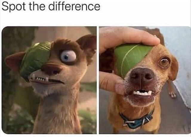Nose - Spot the difference