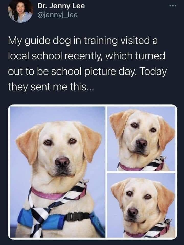 Dog - Dr. Jenny Lee @jennyj_lee My guide dog in training visited a local school recently, which turned out to be school picture day. Today they sent me this...