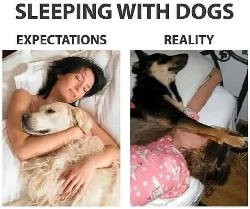 Dog - SLEEPING WITH DOGS EXPECTATIONS REALITY