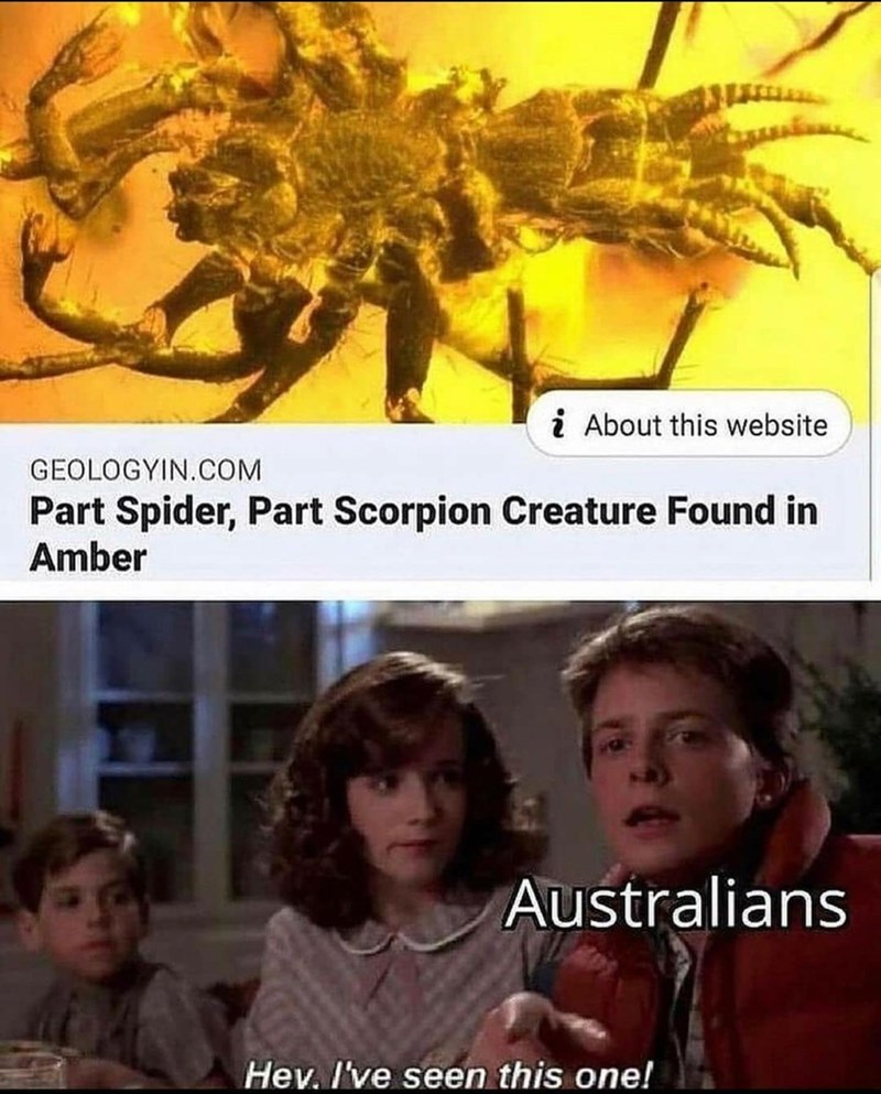 Arthropod - i About this website GEOLOGYIN.COM Part Spider, Part Scorpion Creature Found in Amber Australians Hev. I've seen this one!