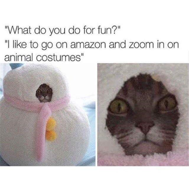 """Nose - """"What do you do for fun?"""" """"I like to go on amazon and zoom in on animal costumes"""""""