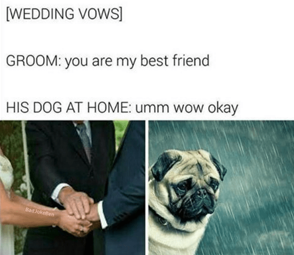 Dog - [WEDDING VOWS] GROOM: you are my best friend HIS DOG AT HOME: umm wow okay BadJokeBen