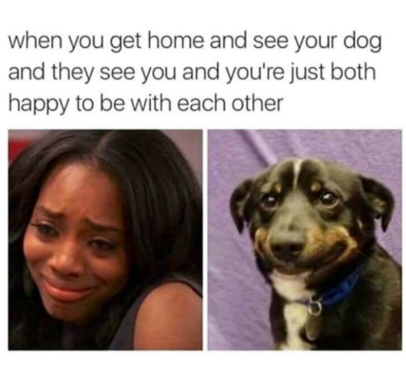 Dog - when you get home and see your dog and they see you and you're just both happy to be with each other