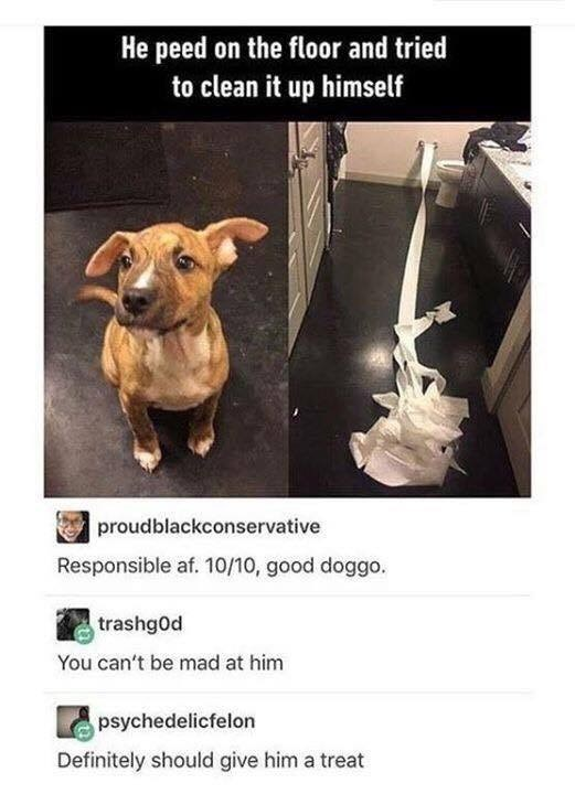 Product - He peed on the floor and tried to clean it up himself A proudblackconservative Responsible af. 10/10, good doggo. trashg0d You can't be mad at him psychedelicfelon Definitely should give him a treat