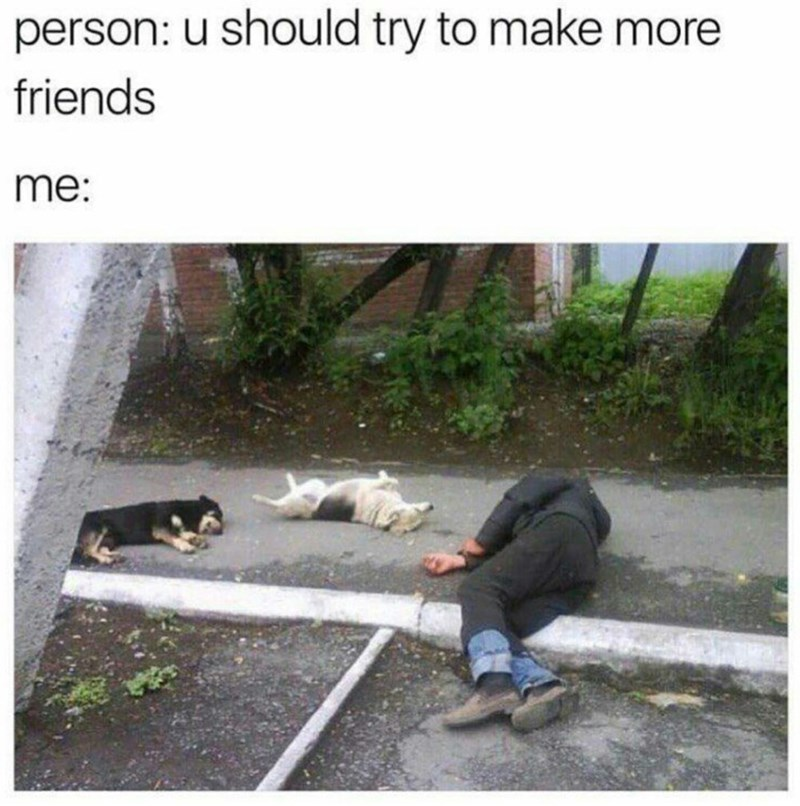 Cat - person: u should try to make more friends me: