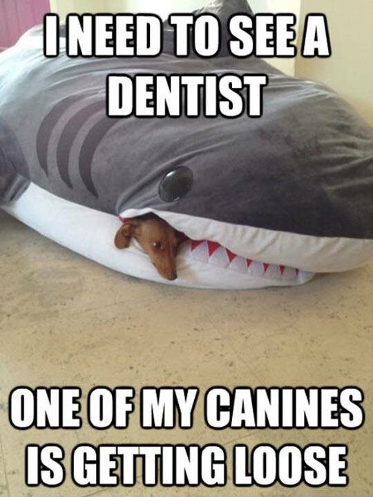 Vertebrate - I NEED TO SEE A DENTIST ONE OF MY CANINES IS GETTING LOOSE