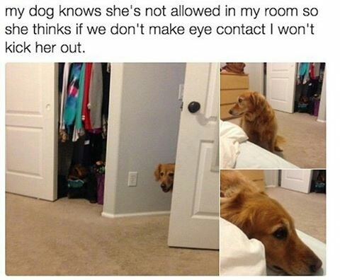 Dog - my dog knows she's not allowed in my room so she thinks if we don't make eye contact I won't kick her out.