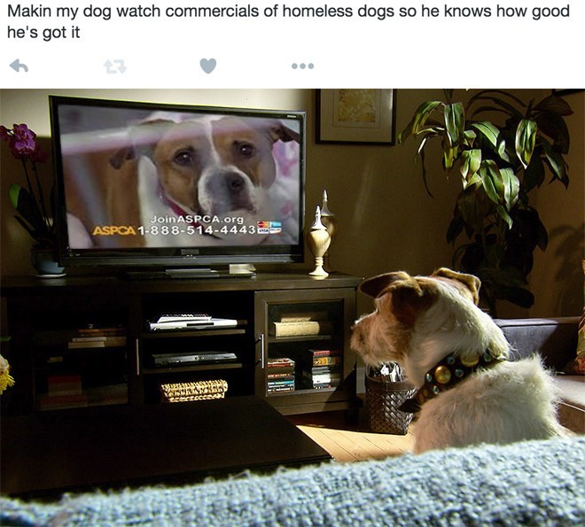 Dog - Makin my dog watch commercials of homeless dogs so he knows how good he's got it JoinASPOCA.org ASPCA 1-888-514-4443 S