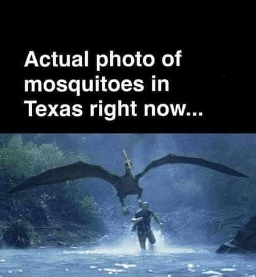 Water - Actual photo of mosquitoes in Texas right now...