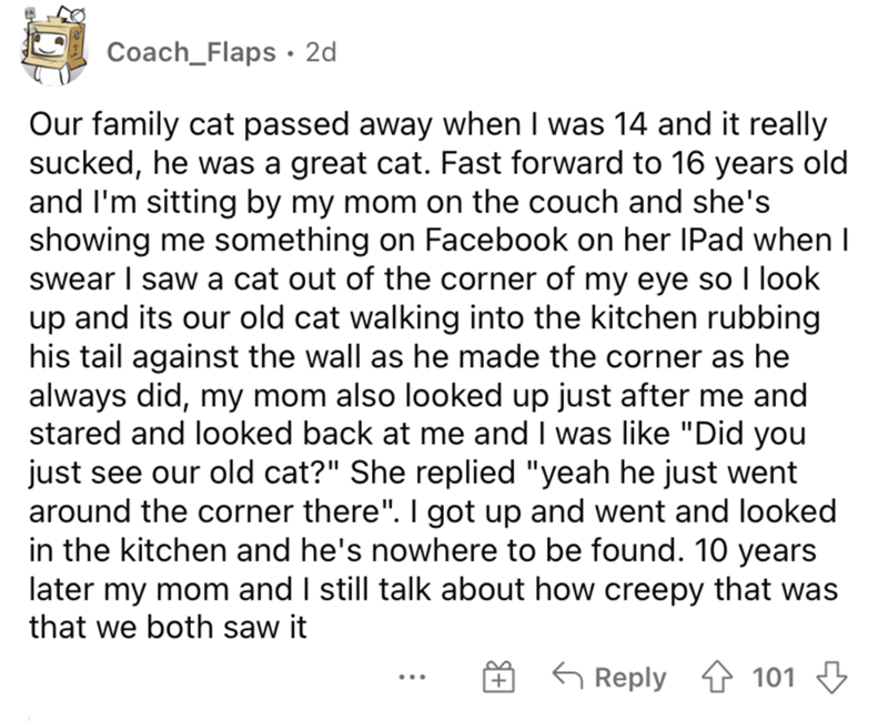 Font - Coach_Flaps · 2d Our family cat passed away when I was 14 and it really sucked, he was a great cat. Fast forward to 16 years old and l'm sitting by my mom on the couch and she's showing me something on Facebook on her IPad when I  swear I saw a cat out of the corner of my eye so I look up and its our old cat walking into the kitchen rubbing his tail against the wall as he made the corner as he always did, my mom also looked up just after me and stared and looked back at me and I was like