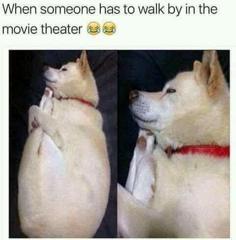 Dog - When someone has to walk by in the movie theater e