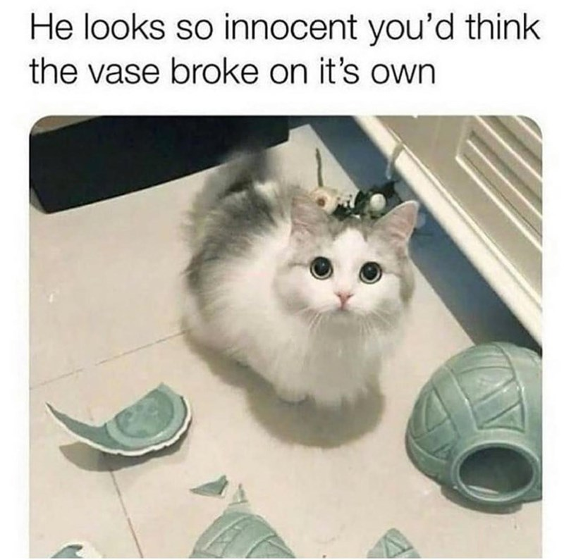 Cat - He looks so innocent you'd think the vase broke on it's own
