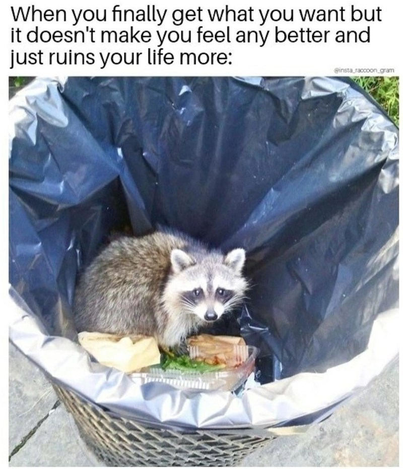 Carnivore - When you finally get what you want but it doesn't make you feel any better and just ruins your life more: @insta raccoon_gram