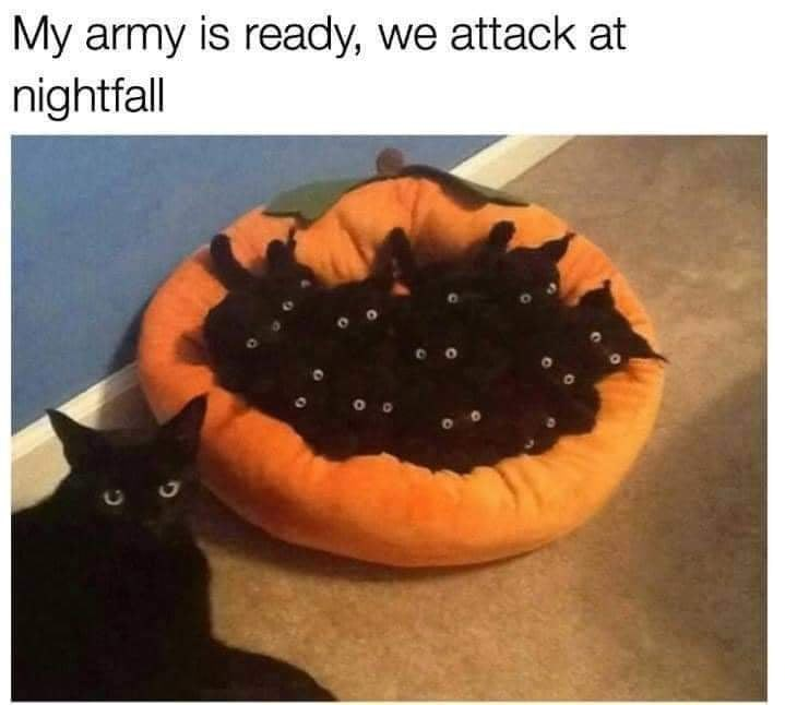 Plant - My army is ready, we attack at nightfall