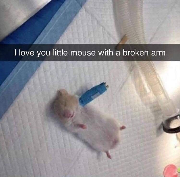 Fawn - I love you little mouse with a broken arm