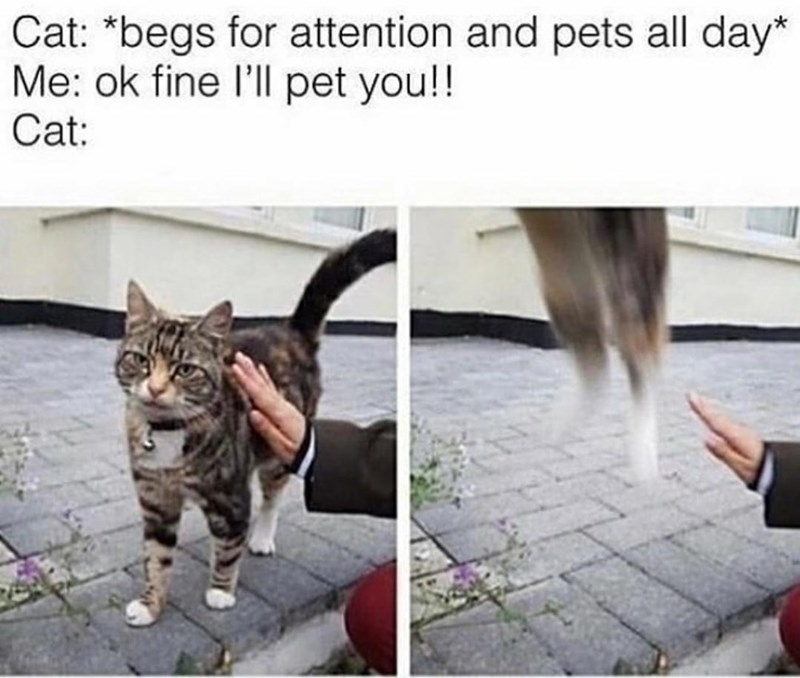 Cat - Cat: *begs for attention and pets all day* Me: ok fine l'll pet you!! Cat: