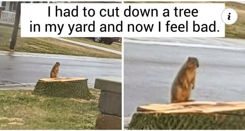 Photograph - I had to cut down a tree in my yard and now I feel bad. i