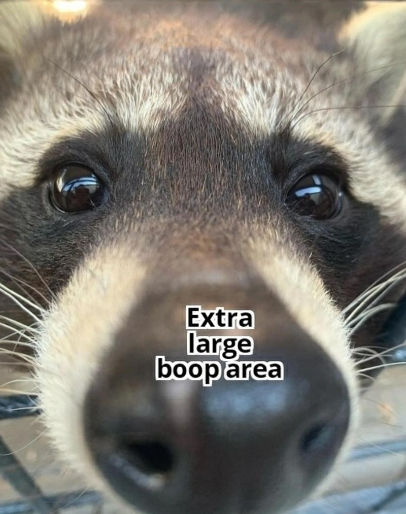 Nose - Extra large booparea