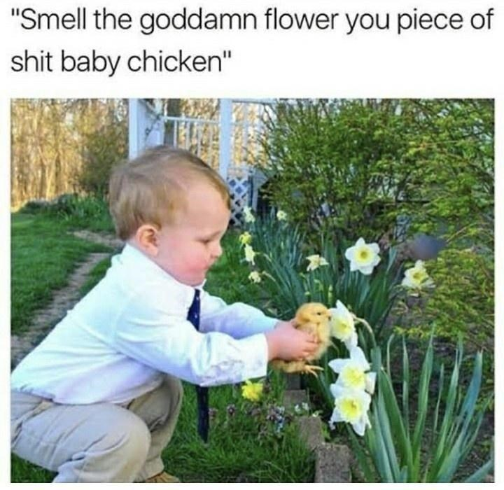 """Face - """"Smell the goddamn flower you piece of shit baby chicken"""""""