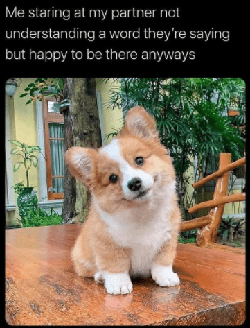 Dog - Me staring at my partner not understanding a word they're saying but happy to be there anyways