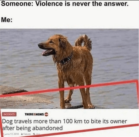 Water - Someone: Violence is never the answer. Me: THEREISNEWS INCIDENTS Dog travels more than 100 km to bite its owner after being abandoned juna 17, 2018 A Fabola