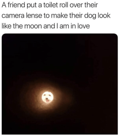 Font - A friend put a toilet roll over their camera lense to make their dog look like the moon and I am in love