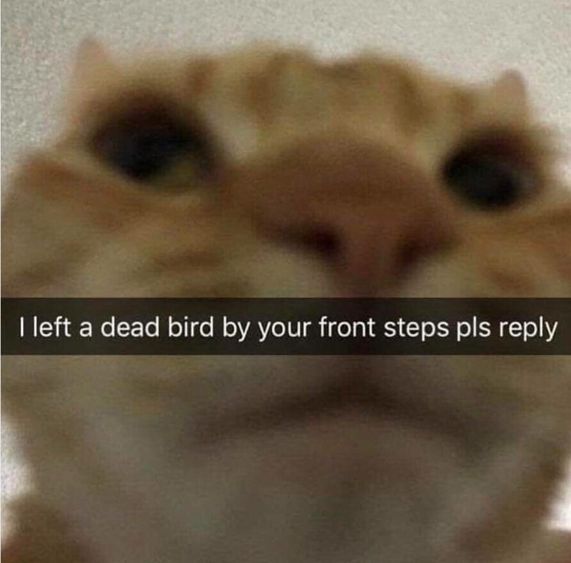 Felidae - I left a dead bird by your front steps pls reply