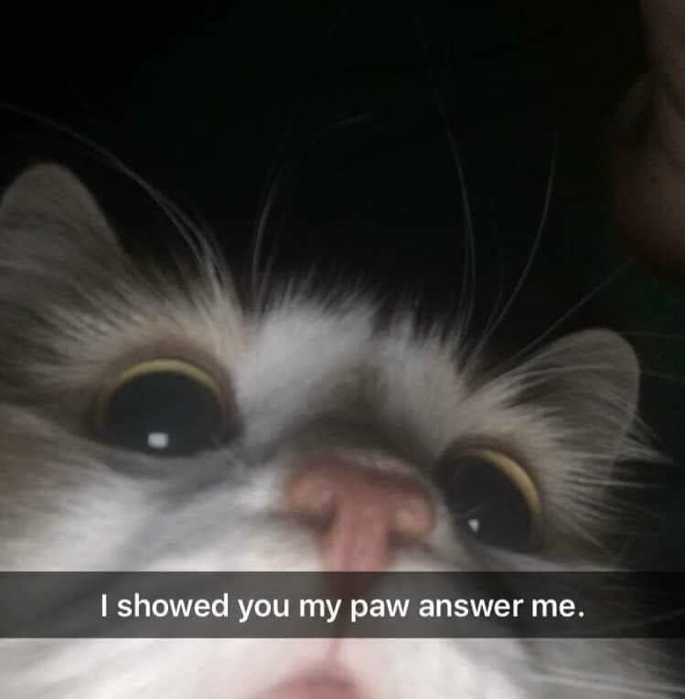Cat - I showed you my paw answer me.