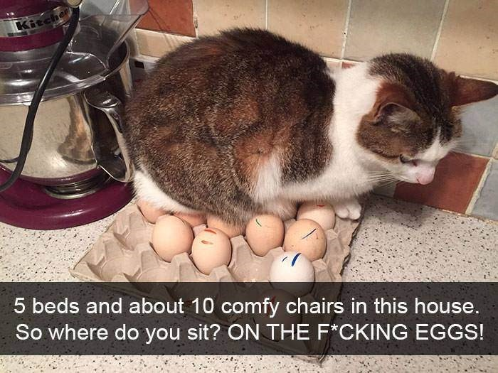 Cat - Kitche 5 beds and about 10 comfy chairs in this house. So where do you sit? ON THE F*CKING EGGS!