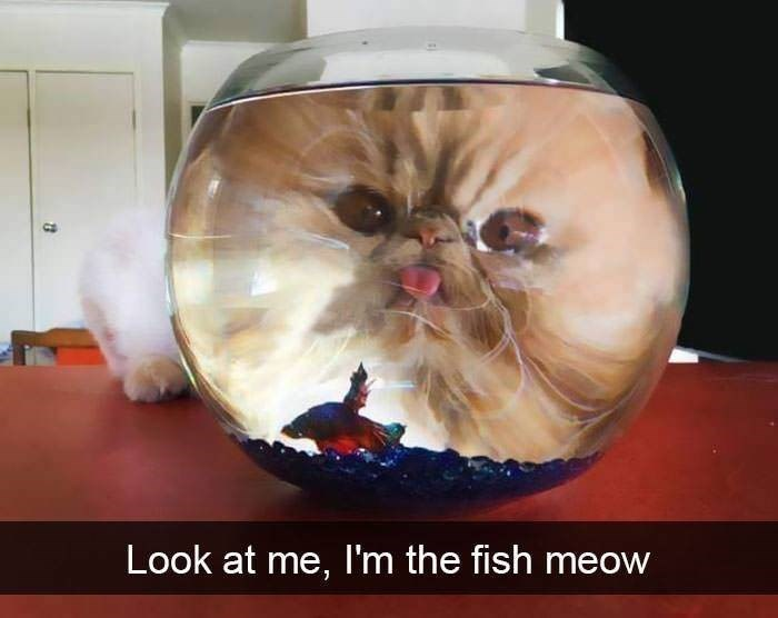 Glasses - Look at me, I'm the fish meow