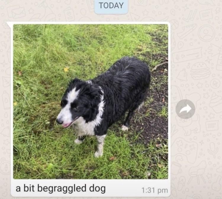 Dog - TODAY a bit begraggled dog 1:31 pm