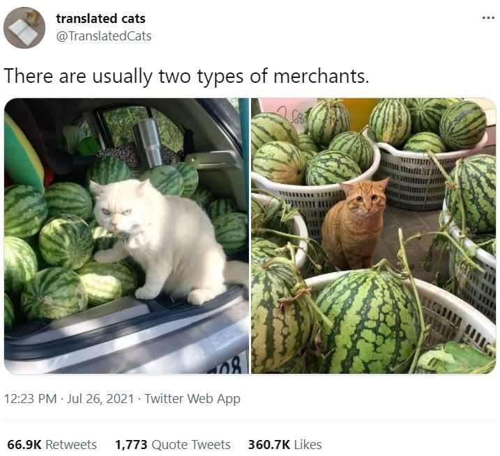 Plant - ... translated cats @TranslatedCats There are usually two types of merchants. ORAANA 12:23 PM Jul 26, 2021 · Twitter Web App 66.9K Retweets 1,773 Quote Tweets 360.7K Likes