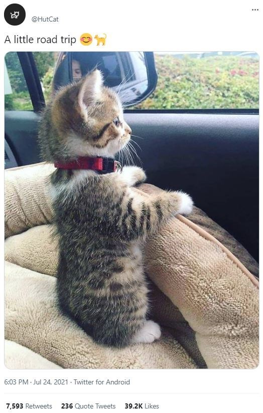 Cat - ... @HutCat A little road trip o 6:03 PM Jul 24, 2021 - Twitter for Android 7,593 Retweets 236 Quote Tweets 39.2K Likes